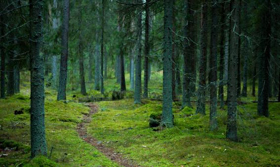 MondeVerde stödjer Naturskyddsföreningen